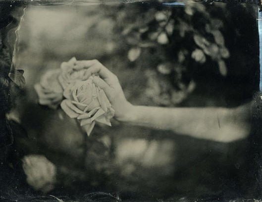 hatgi_rose