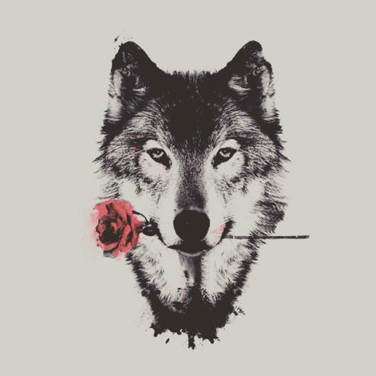 lupo-rosa
